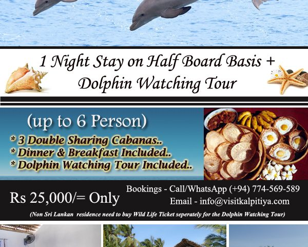 dolphin-watching-with-night-stay